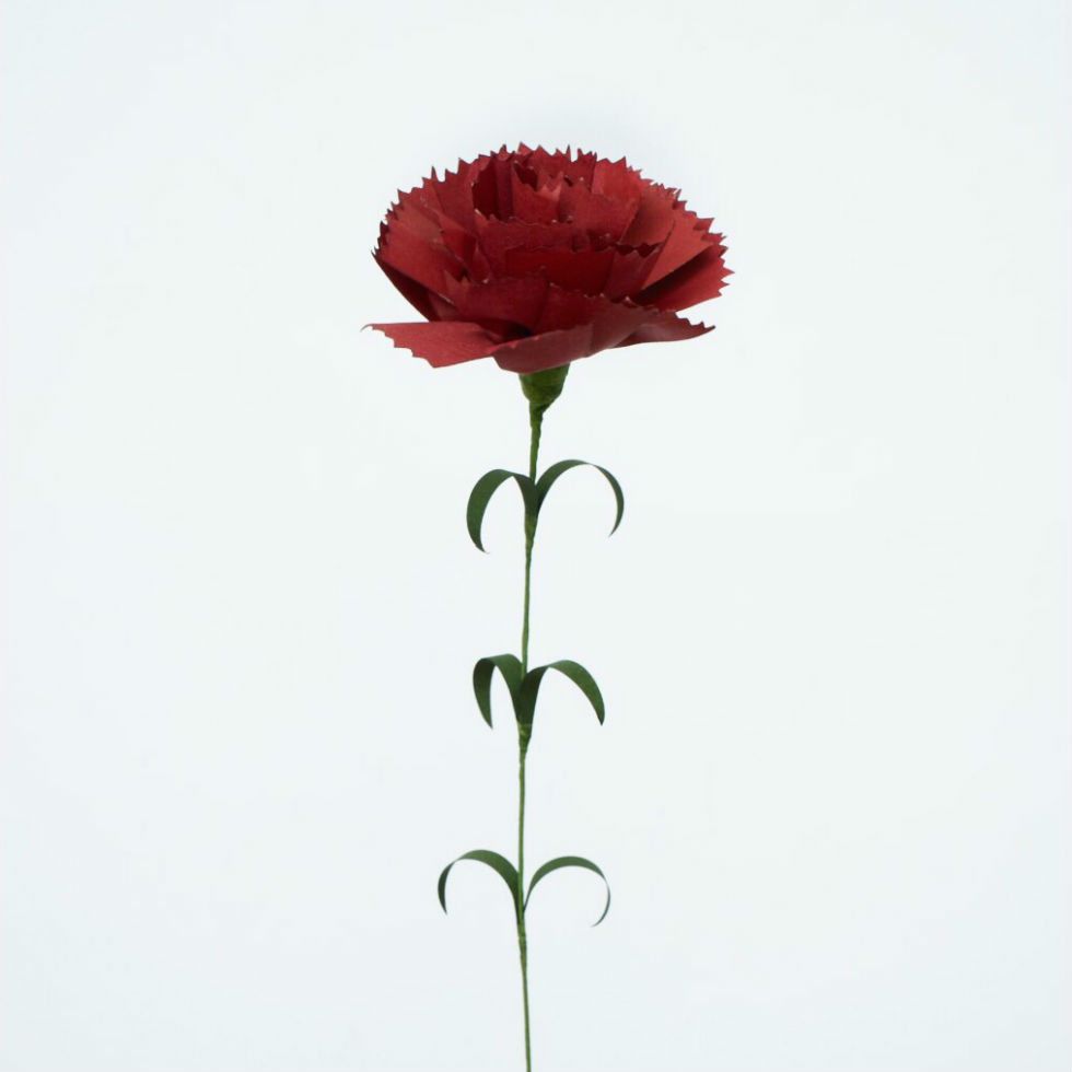 サムネイル:PAPER EDEN  with naoron Carnation red カーネーション レッド