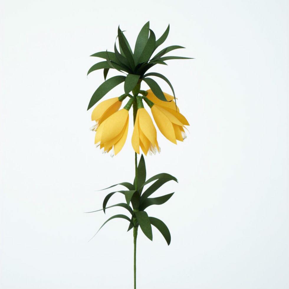 PAPER EDEN  with naoron Fritillaria YELLOW フリチラリア イエロー