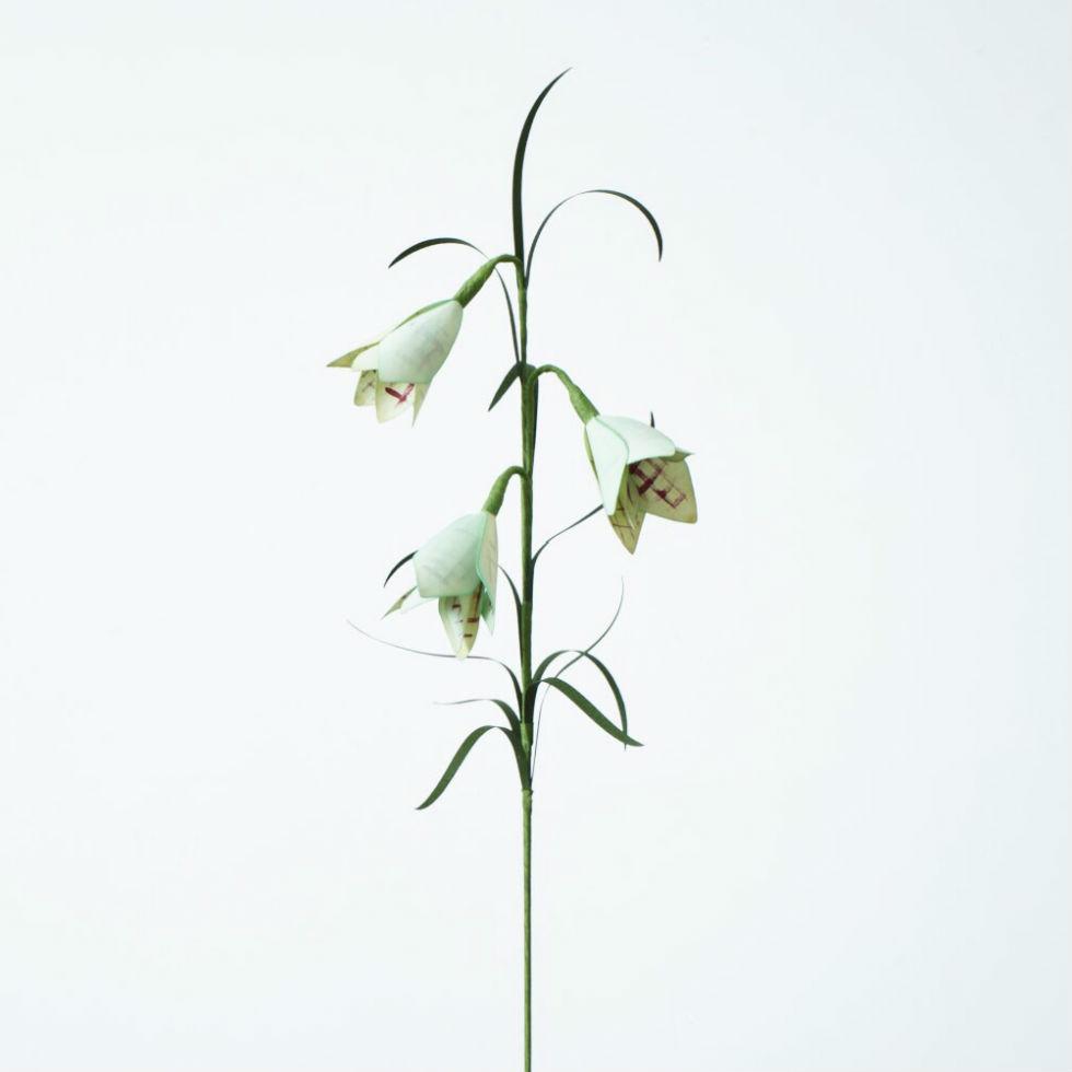 PAPER EDEN  with naoron Fritillaria verticillata PLAID バイモユリ チェック