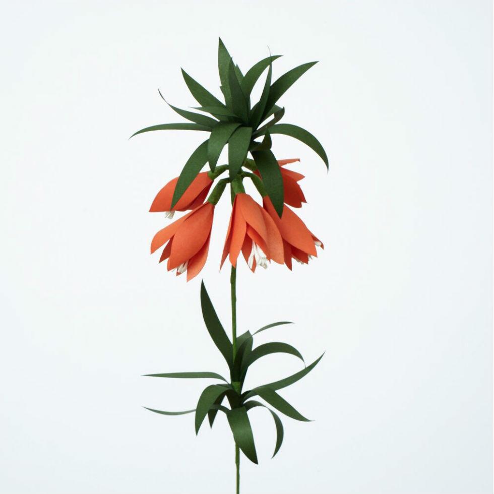 サムネイル:PAPER EDEN  with naoron Fritillaria ORANGE フリチラリア オレンジ